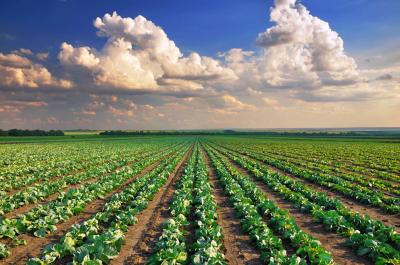 農業の開業
