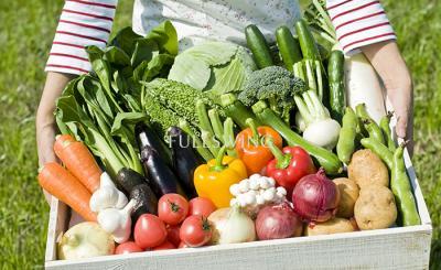 野菜農家は儲かる《開業資金を投資します》