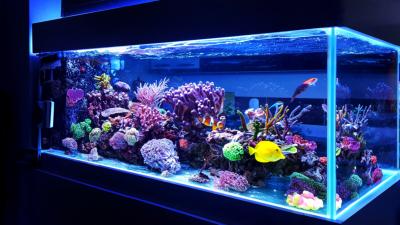 ショップ 熱帯魚 埼玉県のアクアショップ・熱帯魚店の一覧|AQUA MART